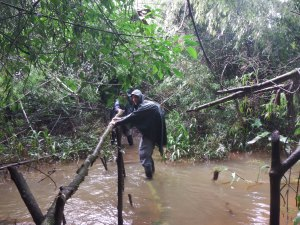 Rain or shine, trekking is on. Much of the forest floor was flooded due to the heavy rain the previous night. Crossing a river on a fallen tree trunk was part of the fun. You cant help but wonder what is lurking in the water