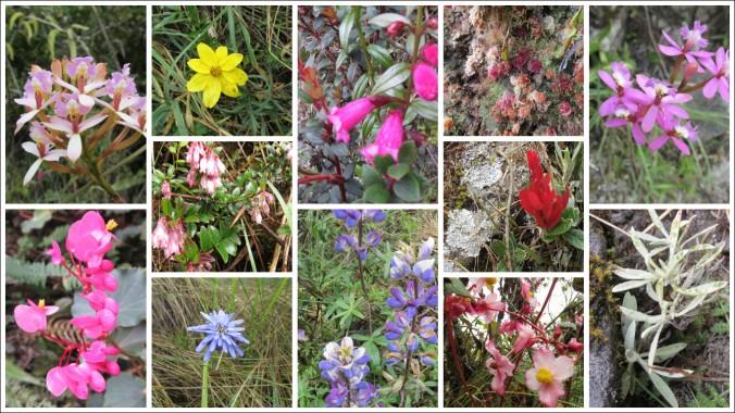 Inca Trail plants