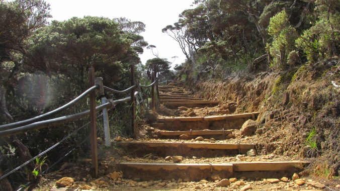 Trail- stairs